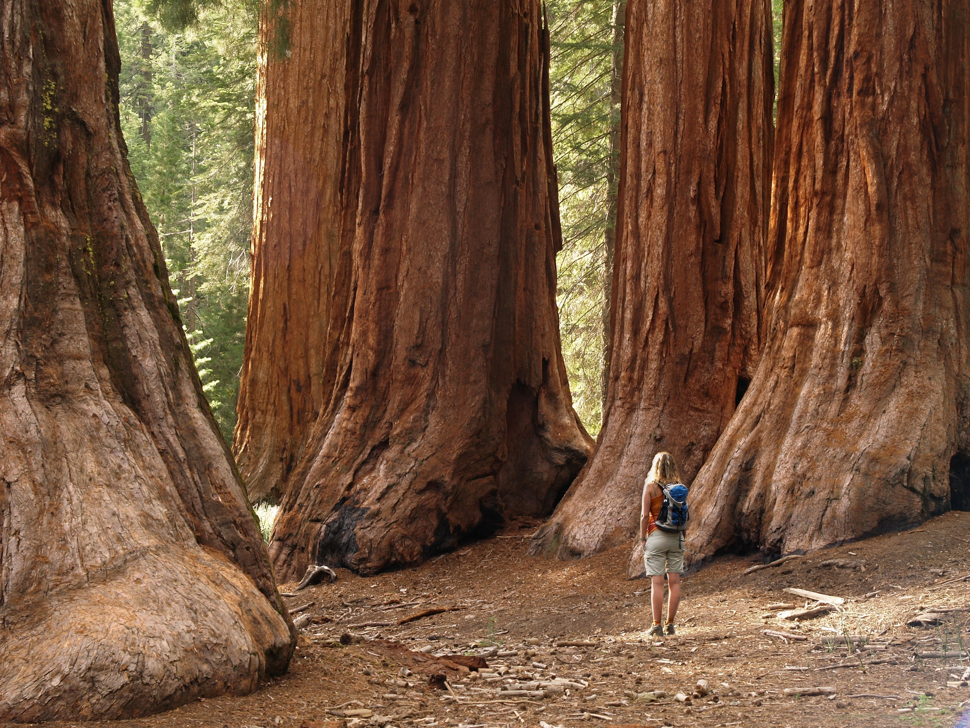 Insurance Quotes Auto >> Yosemite, Sequoia & Kings Canyon National Parks Hotel ...