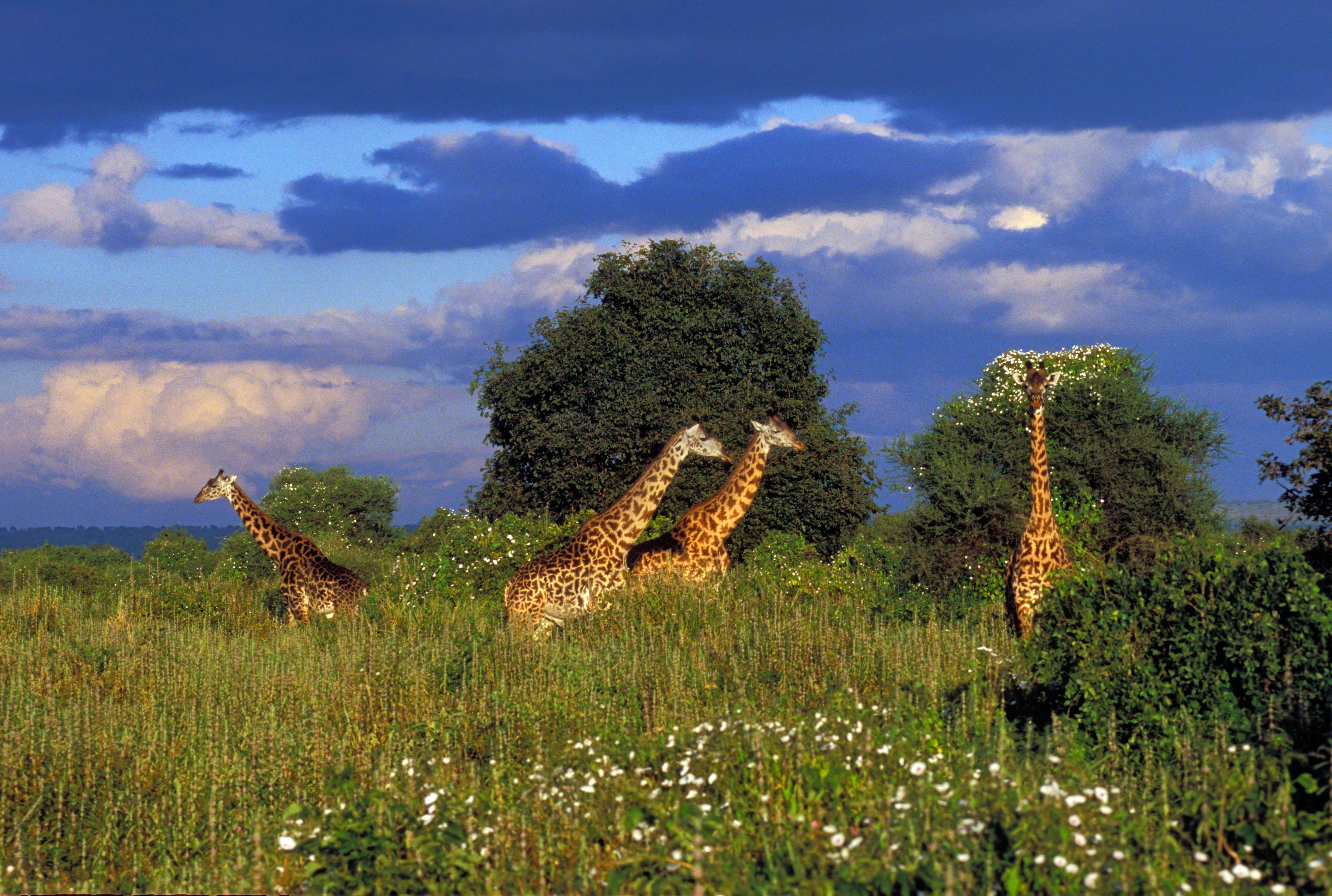 hotels in tarangire national park